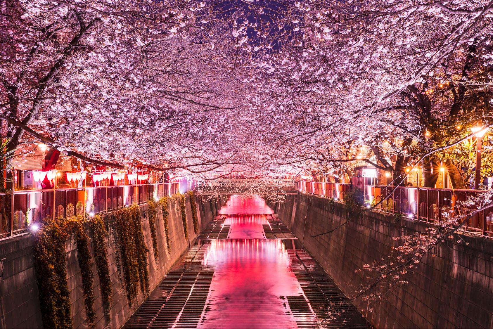 Traditions & art de vivre avec Tobira onsen et l'île de Miyajima